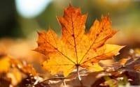 tumblr_static_324-autumn-leaf-pics
